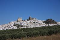スペイン 白い町オルベラとオリーブ畑
