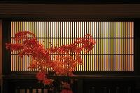 日本 京都府 祇園 格子の灯りと紅葉