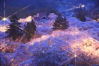 高遠城址公園 高遠小彼岸桜 高遠閣 夜桜