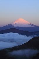 神奈川県 箱根大観山 夜明けの紅富士と雲海