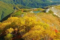 長野県 八方尾根の紅葉と八方池