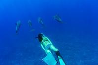 ドルフィンスイム イルカと泳ぐ女性