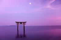 滋賀県 白鬚神社の湖中大鳥居と琵琶湖