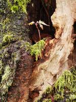 新潟県 モミジ モミジの木に生えたモミジの若木 村松公園