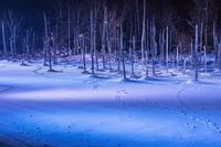 北海道 雪の白金青い池 ライトアップ