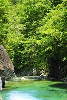 長野県 阿寺渓谷の清流と新緑の木々