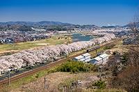 宮城県 白石川堤一目千本桜とJR東北本線