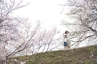 桜の花見をする母と女の子