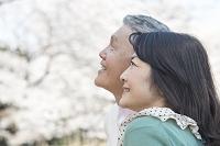 桜の花見をするシニア夫婦