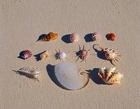 モルジブ 砂浜の貝殻