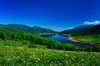 群馬県 中之条町 野反湖とニッコウキスゲ