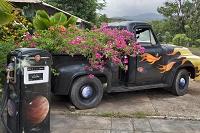 ハワイ ブーケンビリアを積んだトラック