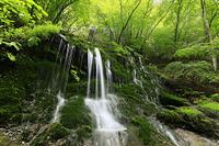 群馬県 新緑の白水の滝