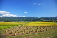 山形県 秋の田園