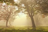 カヤの平の朝霧