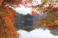 奈良県 鷺池と浮見堂 紅葉の奈良公園