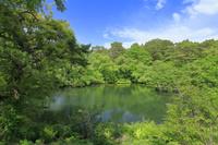 福島県 五色沼 裏磐梯 新緑 磐梯朝日国立公園