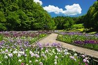 新潟県 しらさぎ森林公園