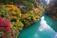 東京都 白丸 紅葉