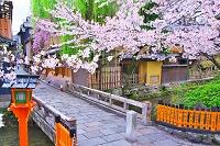 京都府 桜の咲く祇園の巽橋