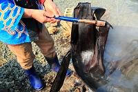 北海道 オヒョウニレの皮を茹でる(オヒョウニレの皮から繊維を...