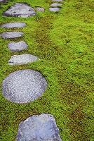 杉苔の庭園と踏み石