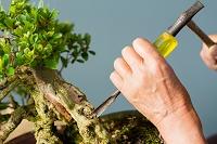 盆栽をつくる男性の手
