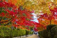 和歌山県 高野山参道の紅葉