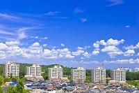 東京都 高層マンションと新興住宅地