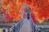栃木県 紅葉の紅の吊橋 塩原温泉