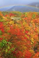 宮城県 鳴子峡 虹と紅葉