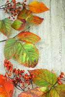 紅葉と野バラの実