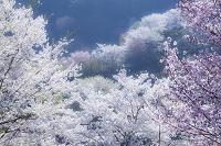 陸郷夢農場山里の春