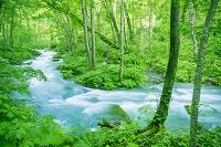 青森県 奥入瀬渓流と森