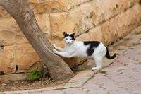 マルタ共和国 爪とぎする猫