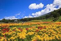 長野県 富士見高原花の里