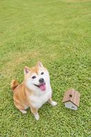 柴犬と家のミニチュア