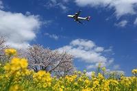 菜の花畑を飛ぶボーイング747 JAL サクラ