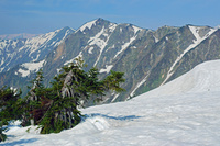 長野県 爺ケ岳の稜線から岩小屋沢岳中央の山