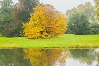 ドイツ ポツダム 紅葉