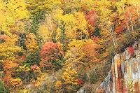 北海道 大雪山国立公園層雲峡の紅葉