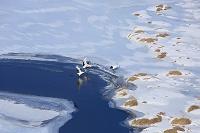 コッタロ湿原のタンチョウ親子