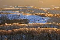 北海道 夕陽に輝く雨氷の森