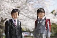 桜の下でランドセルを背負う新入学の男の子と女の子