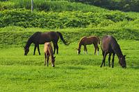 北海道 サラブレッド銀座と馬