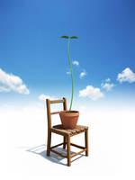 青空バックに椅子と新芽の生えた植木鉢