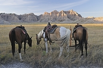 アメリカ バッドランズ国立公園と馬