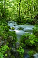 青森県 新緑の奥入瀬渓流 三乱の流れ