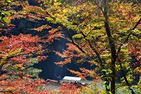 京都 紅葉の嵐山 屋形船