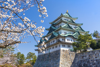 愛知県 桜咲く名古屋城
